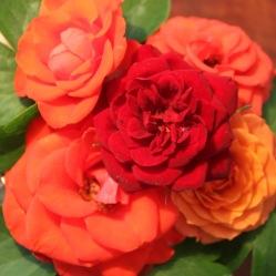 a5688-rosen4-kopie