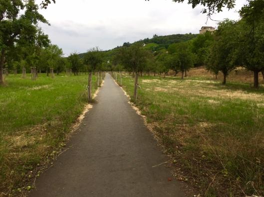 Spazierweg durch den Blütengrund